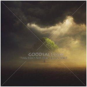 dark-storm-and-tree-GoodSalt-kacas0471