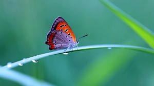 colorful_butterfly-1600x900